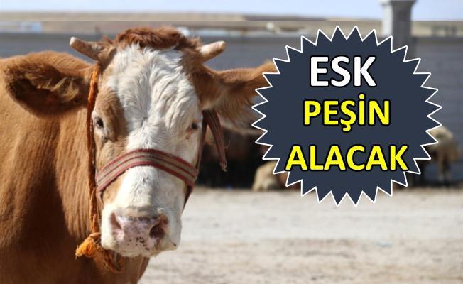 Et ve süt kurumundan kurban satıcısına müjde!