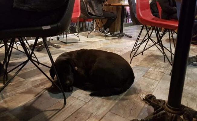 Köpek, yağmurda çay ocağına girdi