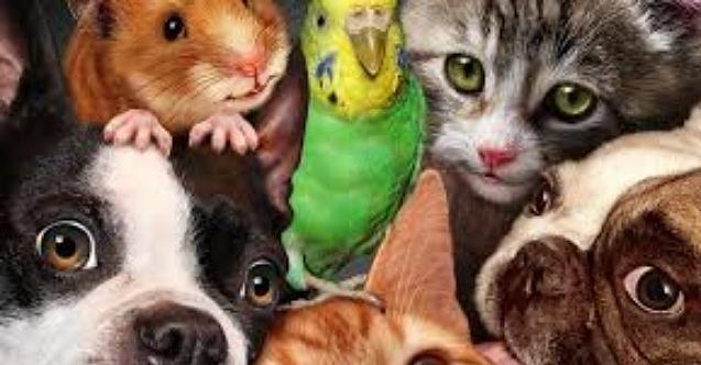Bugün onların! 4 Ekim Hayvanları Koruma Günü!