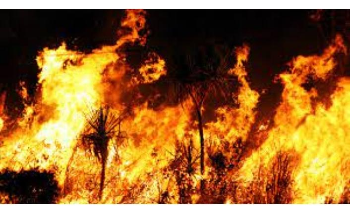 Türkiye yanıyor: İl il yangın söndürme çalışmalarında son durum ne?